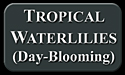 Day-Blooming TROPICAL WATERLILIES